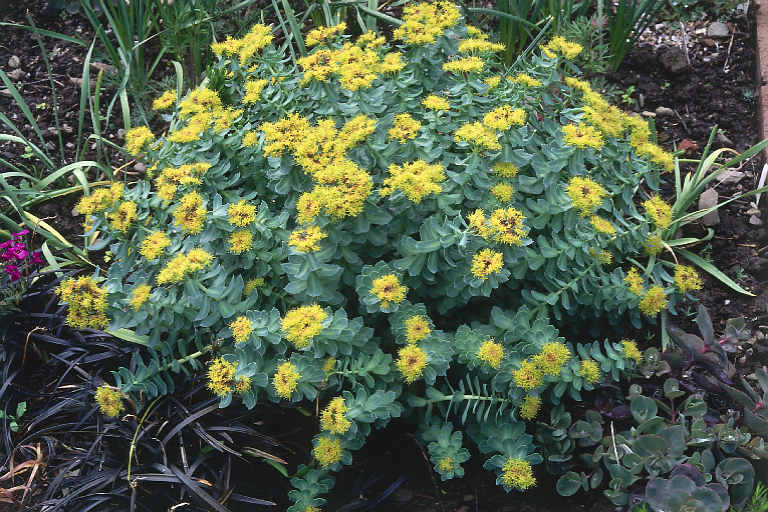 Home - Individuals are being blessed with the Rhodiola Rosea